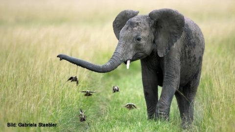 Bild: Gabriela Staebler - Sehnsucht Savanne - Faszination Safari