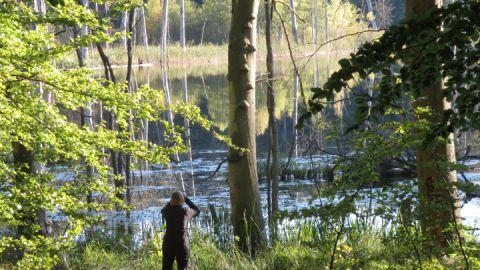 """Neues Seminar im Müritz-Nationalpark - """"Wildnis erfahren"""""""