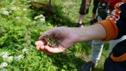 Sommerferien im Müritz-Nationalpark