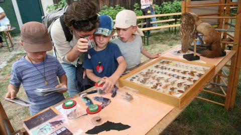 Für kleine und große Fledermaus-Fans gibt es viel zu entdecken.