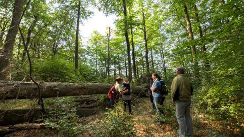 Ranger Claus Weber lenkt den Blick der Besucher auf die Details