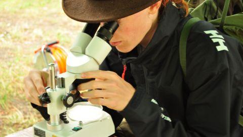 Entdeckerwoche - Kleines wird unter dem Mikroskop groß