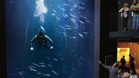 aquarium_1287408943_37