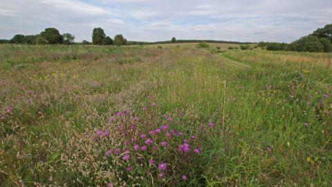 Blütezeit am Ostufer der Feisneck