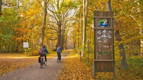 Radeln im Müritz-Nationalpark