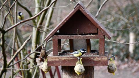 Unsere Wintervögel im BÄRENWALD