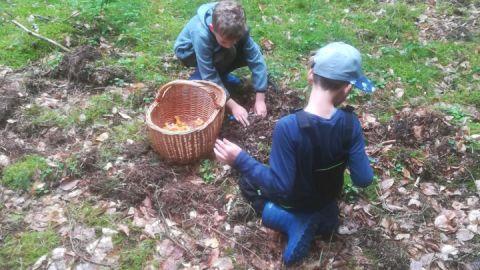 Junge Pilzsucher im Müritz-Nationalpark