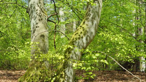 Frühling im Müritz-Nationalpark