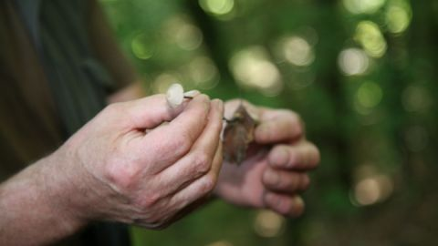 Pilze im Müritz-Nationalpark