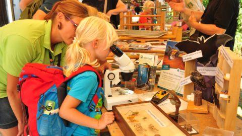 Es lässt sich vieles erforschen bei der Fledermausnacht - manchmal muss man mit dem Mikroskop vergrößern