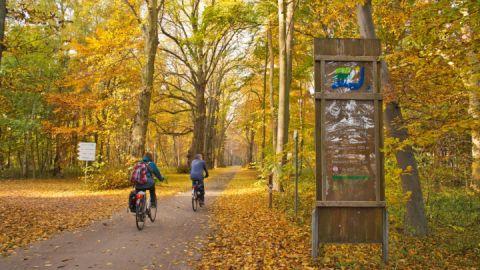 Radfahren im Müritz-Nationalpark