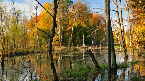 Artenvielfalt am Schweingartensee - Müritz-Nationalpark