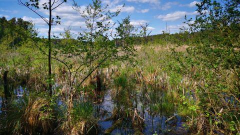 Mühlensee bei Speck