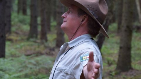 Meditative Wanderung durch die Buchenwälder